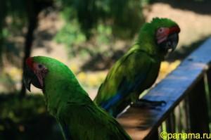 Животный мир Панамы. Часть №2