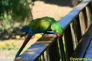 Животный мир Панамы. Часть №1