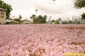 Природа Панамы. Часть №2