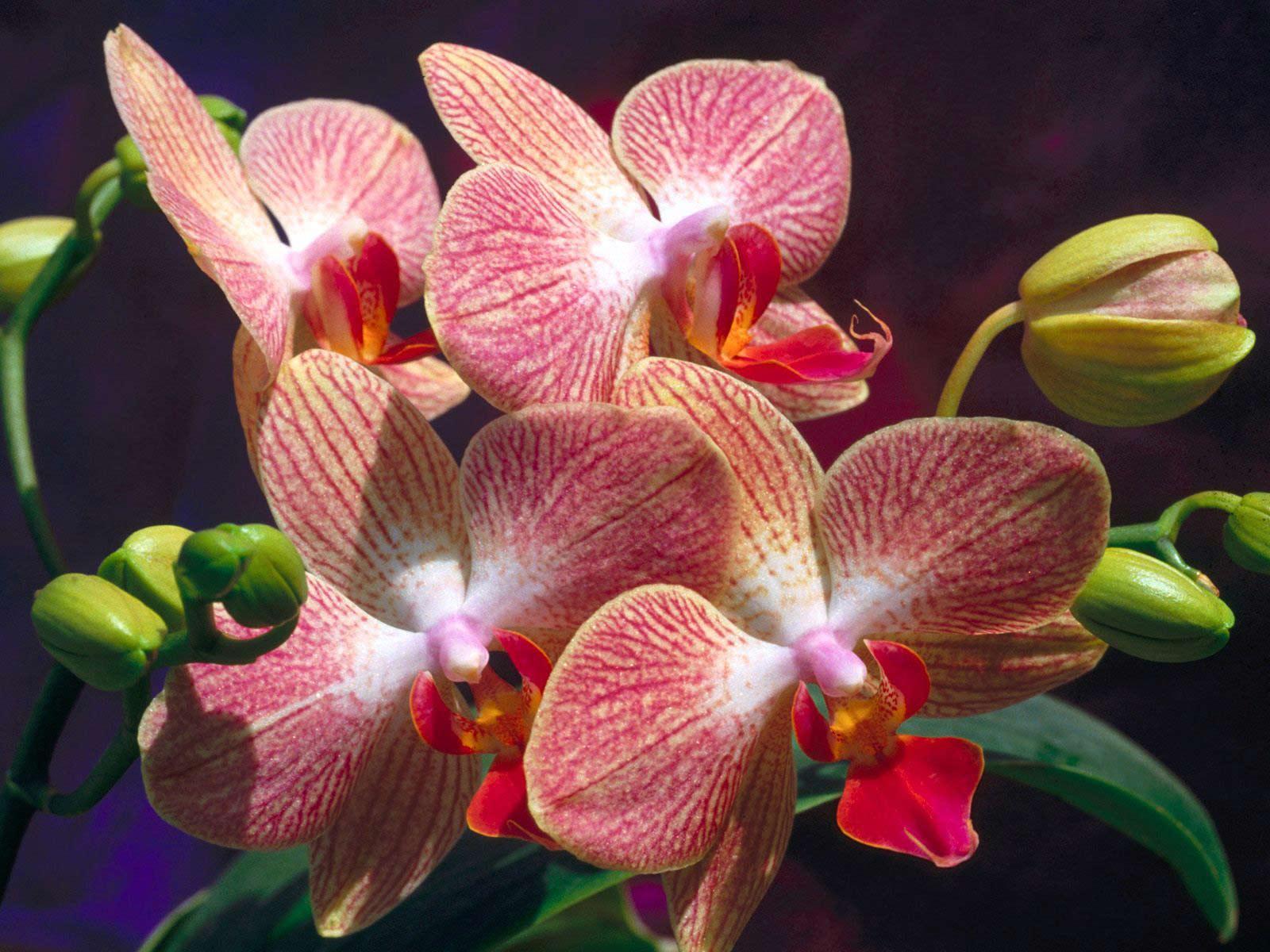 Красивые экзотические цветы хорошего качества