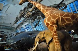museo-historia-natural-mamiferos