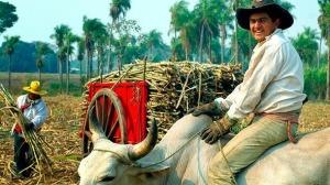 campesino paraguay